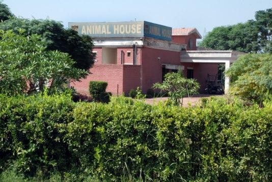 University Of Veterinary  U0026 Animal Sciences